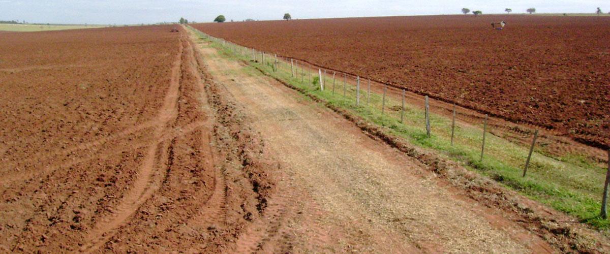 Planeta perde 33 mil hectares de terra fértil por dia