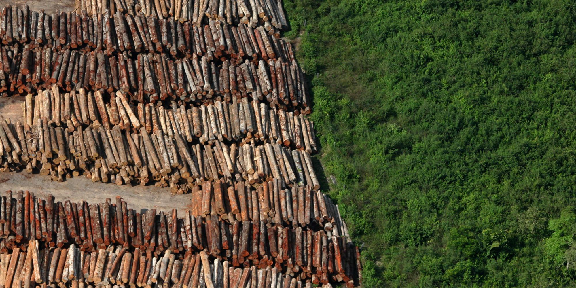 Resultado de imagem para amazonia desmatamento