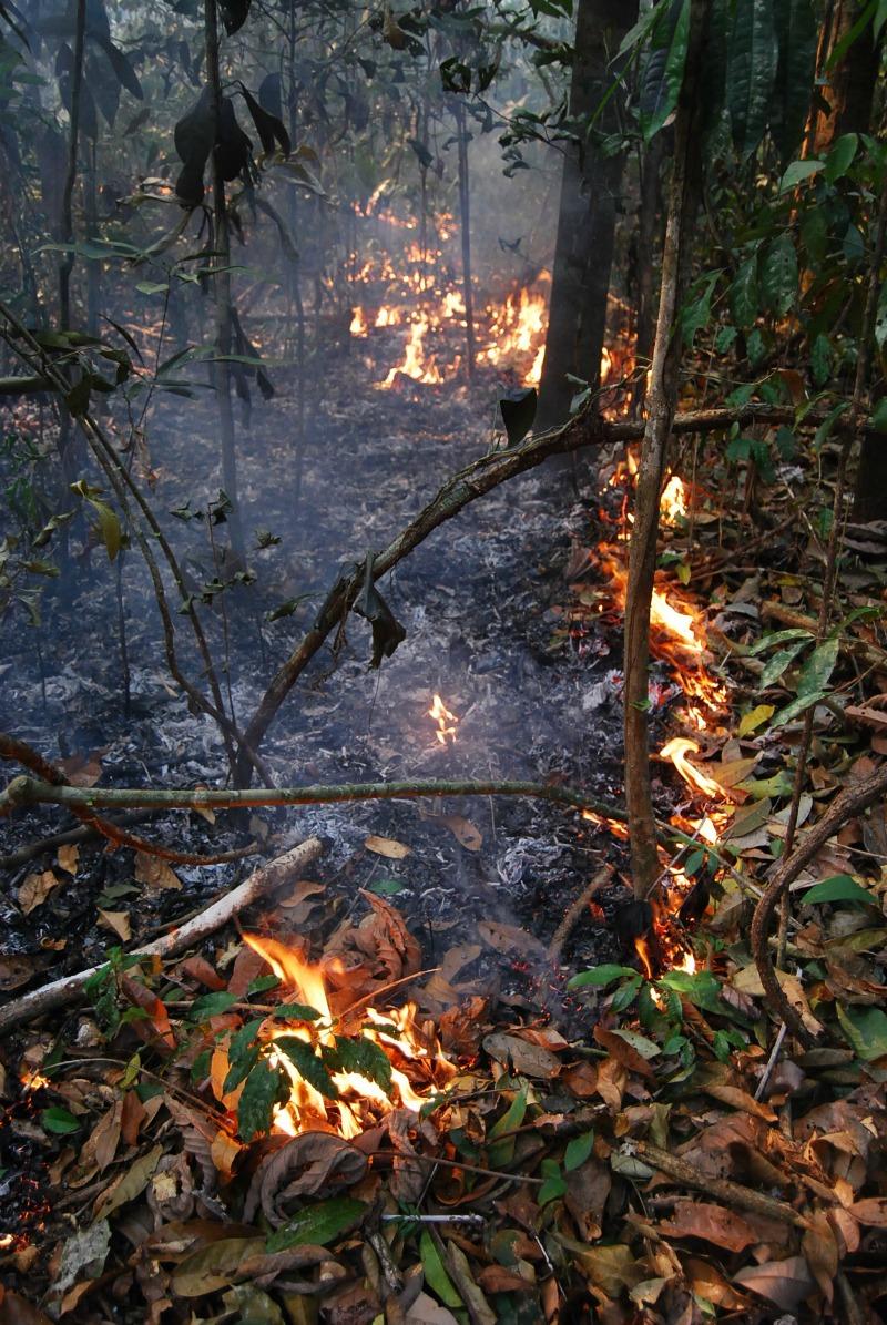 Queimada na Amazônia (Foto: Erika Berenguer / Arquivo Pessoal)