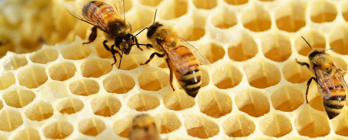 Resultado de imagem para O massacre das abelhas pelo agrotóxico. Nos últimos anos, mais de um bilhão de abelhas foram mortas no Brasil. Entrevista especial com Lionel Segui Gonçalves