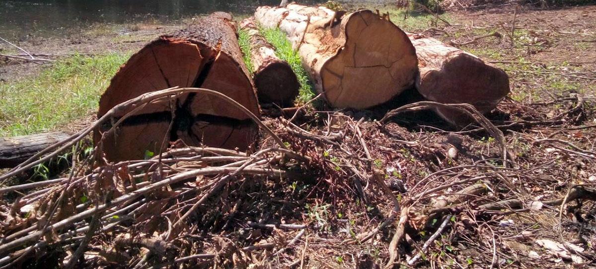 Resultado de imagem para Desmatamento na Amazônia pode atingir limite irreversível, com mudanças para vegetação rala e esparsa e baixa biodiversidade