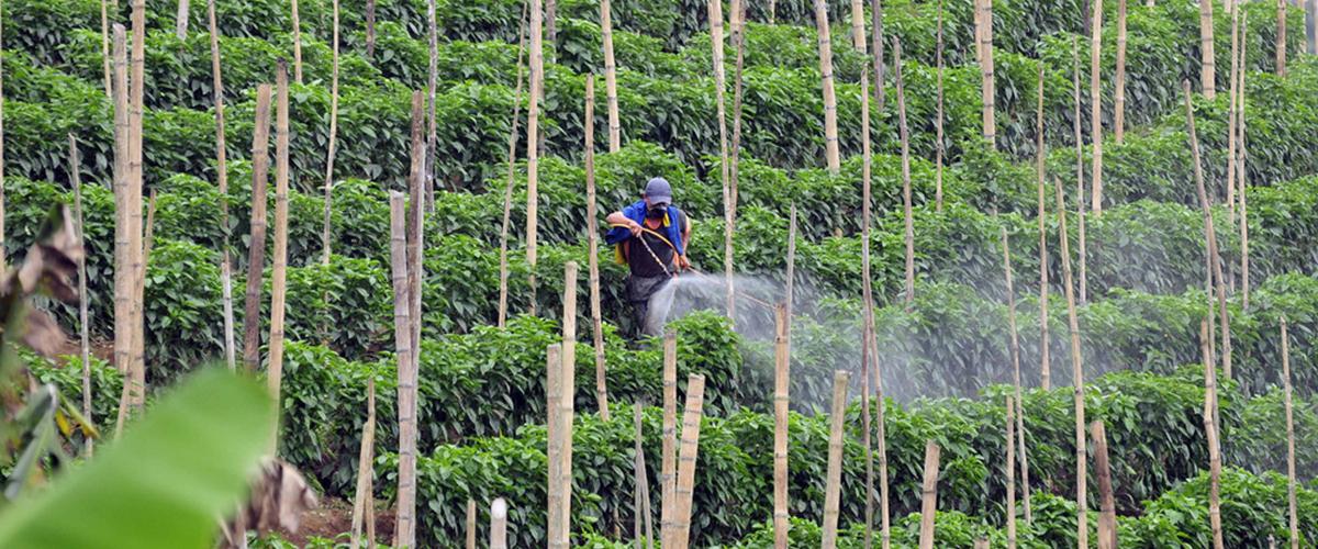 15_05_pesticida_agrotoxico_foto_ciat_flickr_cc.jpg
