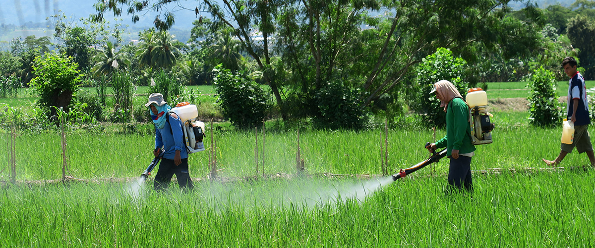 17_05_agrotoxico_pesticida_aplicacao_foto_development_planning_flickr_cc.jpg