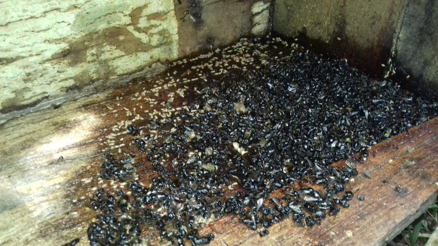 Registro dos apicultores mostra a morte das abelhas | Foto: Arquivo pessoal