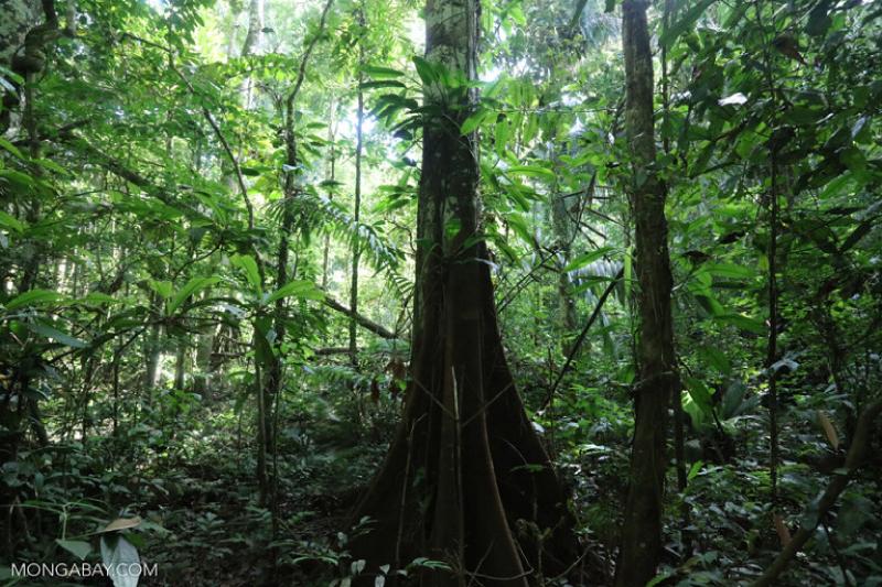 A aparente abundância de água da Amazônia alimenta a floresta, a agricultura e a infraestrutura energética do Brasil. Mas, a menos que algo seja feito, essa fonte poderá secar, devastando a economia do país. (Foto: Rhett A. Butler /Mongabay)