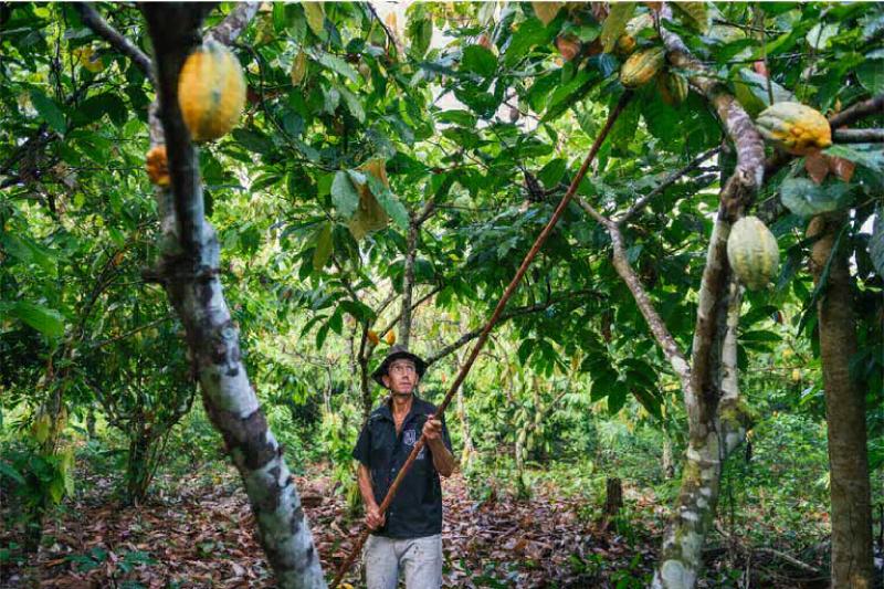 O ponto de inflexão da Amazônia, que intensificará as secas, não prejudicará apenas o agronegócio em grande escala, mas também os agricultores familiares brasileiros que alimentam a maior parte do país. (Foto: © Kevin Arnold / TNC)