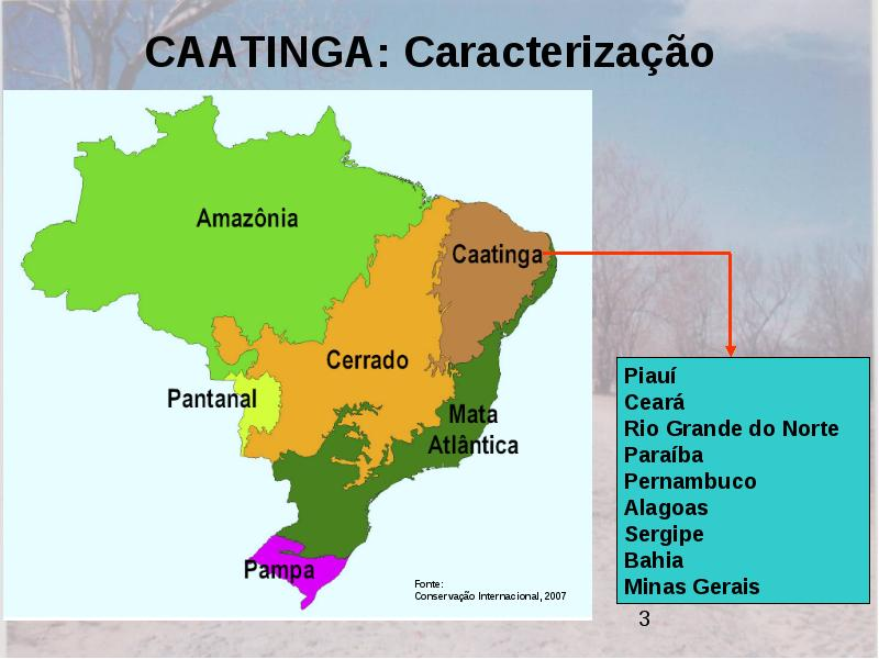 60% da caatinga já foi modificada por atividades humanas